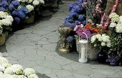 Flowers at Aspiration Ground - Photo by Sharani
